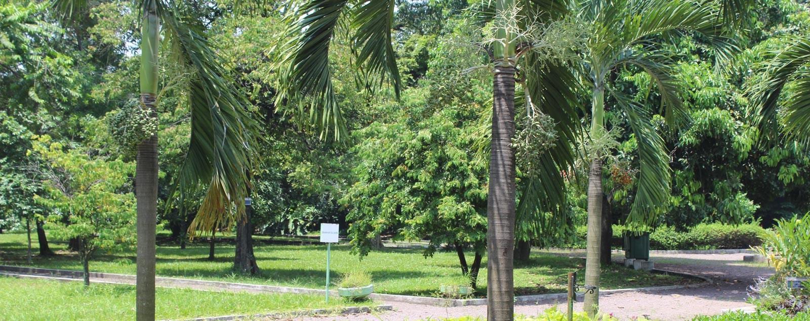 J r mie kisembo publie r solvons nos conflits la for Jardin zoologique kinshasa